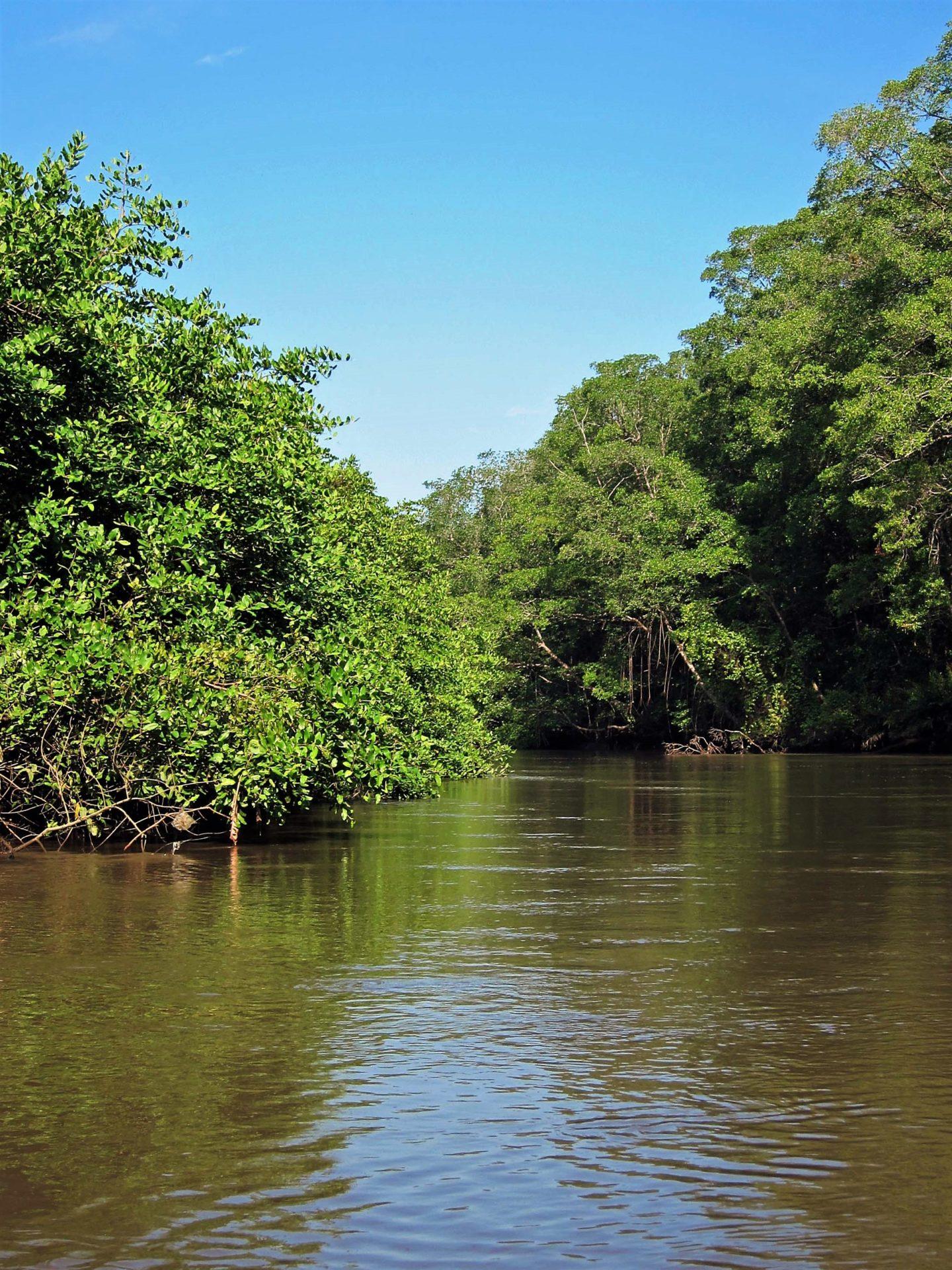 Estero Guacalillo, Rio Tarcoles, Costa Rica