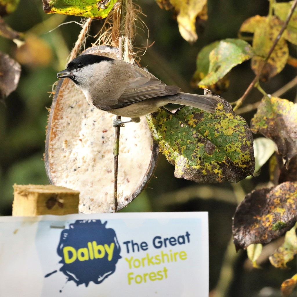 The Big Forest Find: 25 amazing species found in Dalby Forest