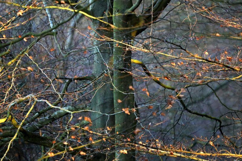 SPARKLER TREES